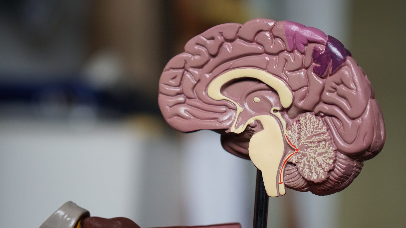 Changing the Brain for Health